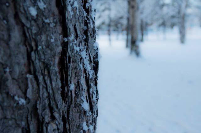 0℃の公園