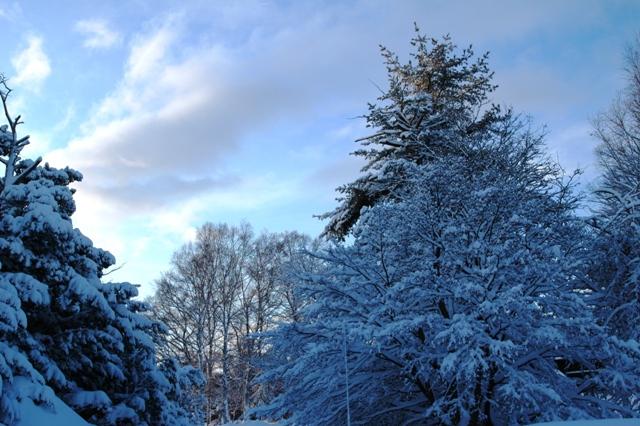 雪はもういらね~☆