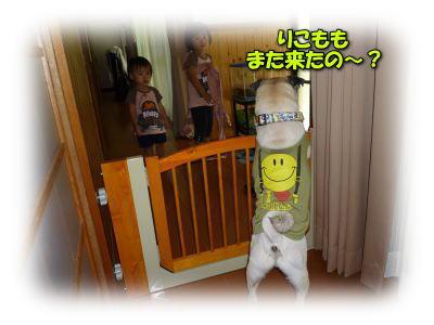 image1_20110808020220.jpg