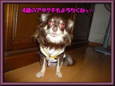 image20_20110803005330.jpg