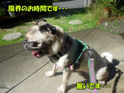 image2_20110715000023.jpg