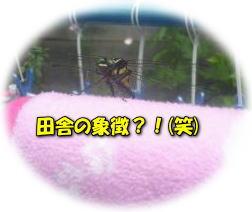 image4_20110722012314.jpg