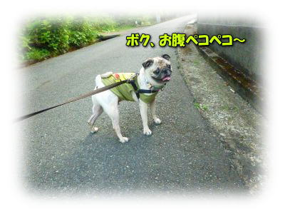 image6_20110808020219.jpg