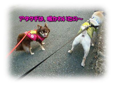 image7_20110808020301.jpg