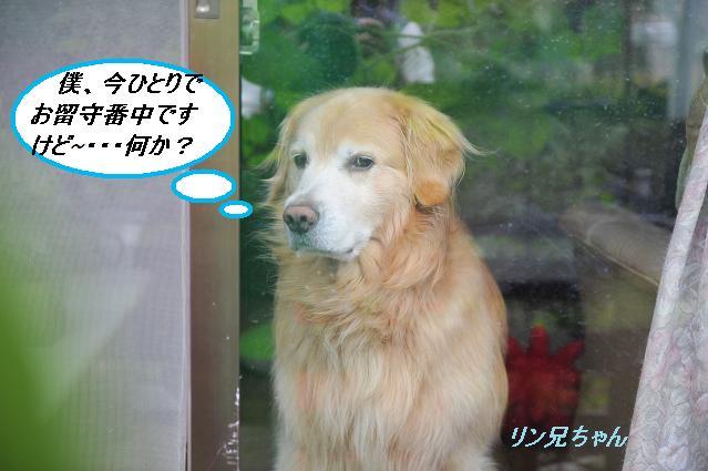 404  リン兄ちゃん