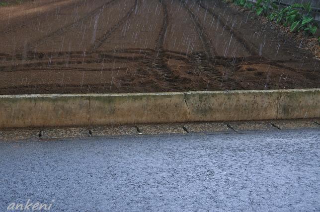 001  雨