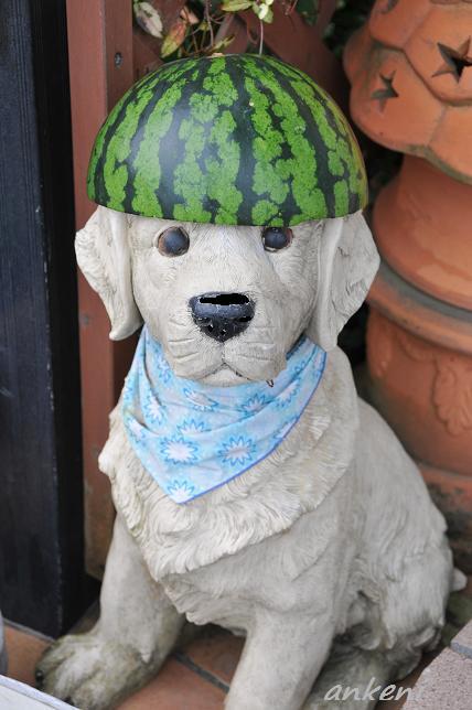 018  スイカ帽子