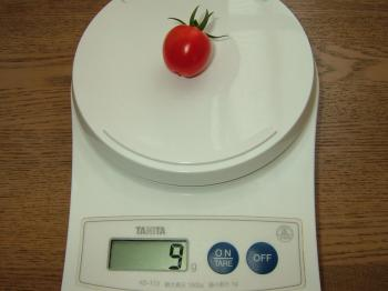 tomato19.jpg