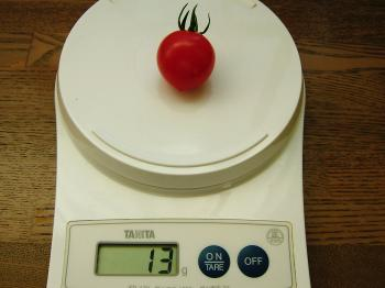 tomato36.jpg
