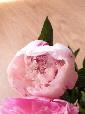 blooming2.jpg