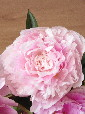 blooming5.jpg