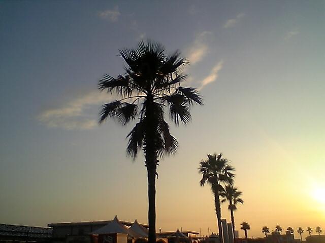 椰子と夕焼け