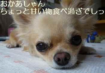 blog2011072402.jpg