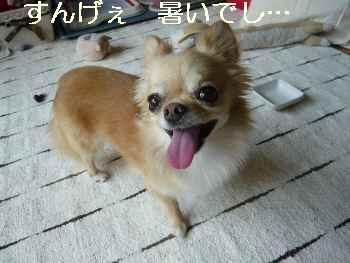 blog2011072504.jpg