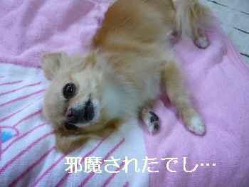 blog2011072602.jpg