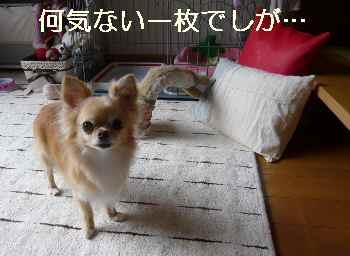 blog2011072701.jpg