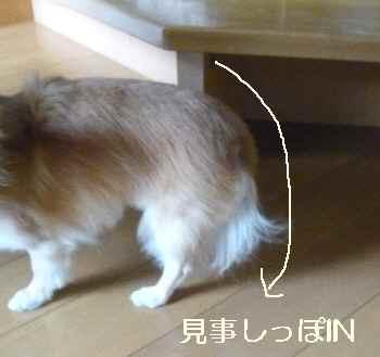blog2011072801.jpg