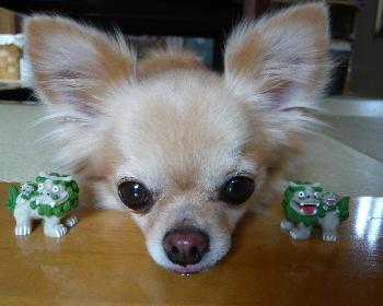 blog2011072802.jpg