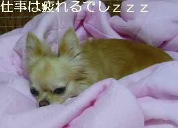 blog2011072904.jpg