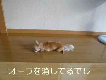 blog2011073001.jpg