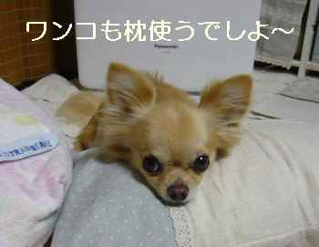 blog2011080404.jpg