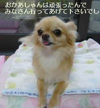 blog2011080603.jpg