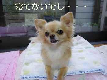 blog2011080701.jpg