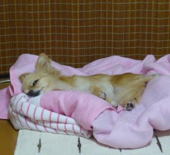 blog2011081401.jpg