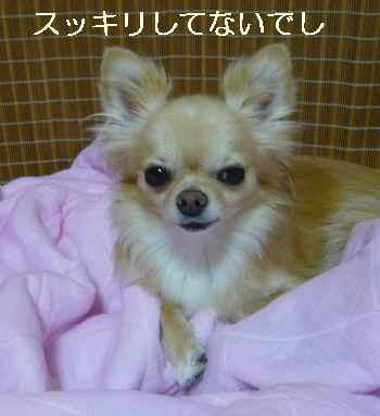 blog2011081603.jpg
