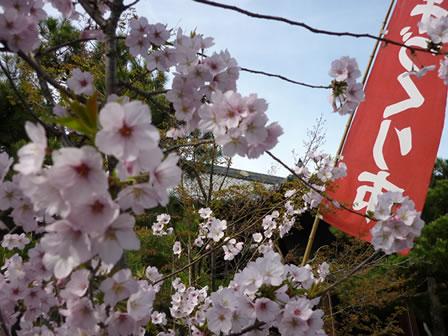 ichi415-1.jpg