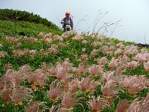 hitokoma2011-729-7.jpg