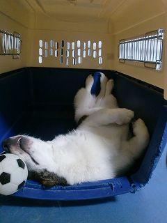 あ~、疲れた。