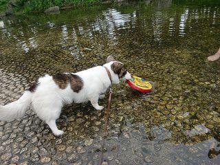 フリスビーは、欲しいの。でも、お水は、コワイの。