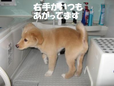 お風呂が好き_convert_20090626131535
