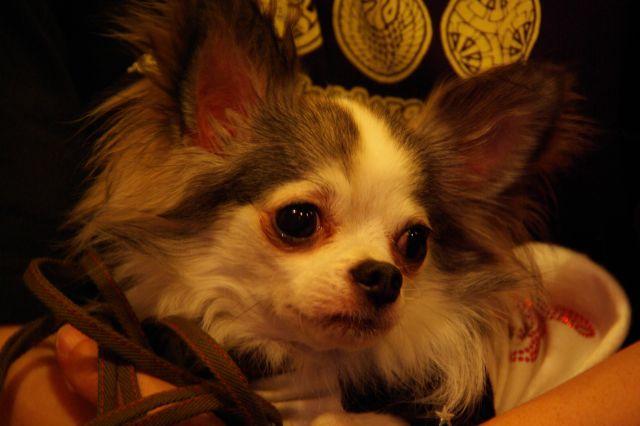 2009.6.21yumiko&tomoちゃんと 118