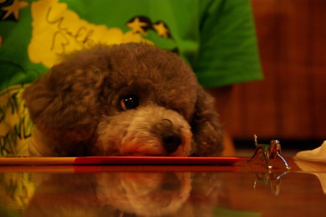 2009.6.21yumiko&tomoちゃんと 135