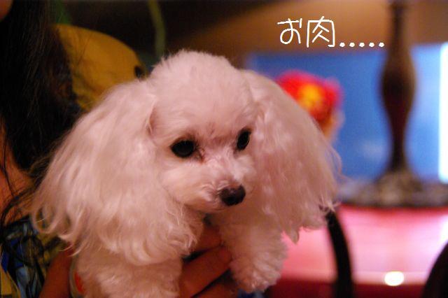 2009.7.20タバサ&ピコちゃんと原宿 379
