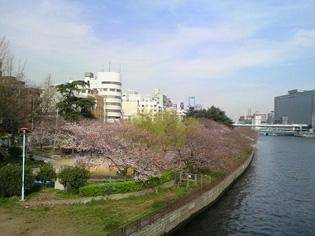 090403_sakura1.jpg