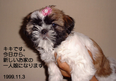 090407_kiki_01.jpg