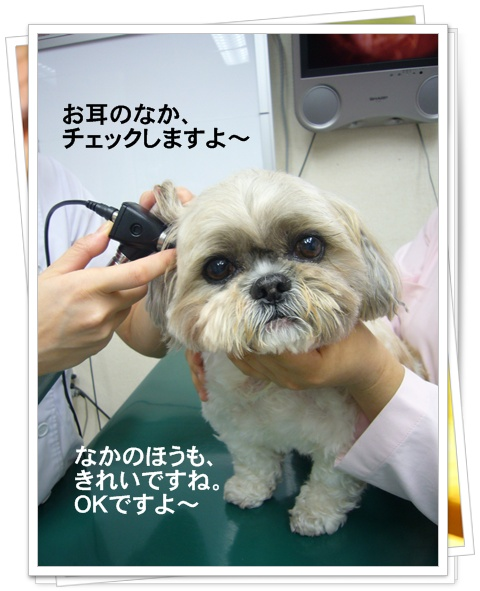 090510_kikitaku_01.jpg