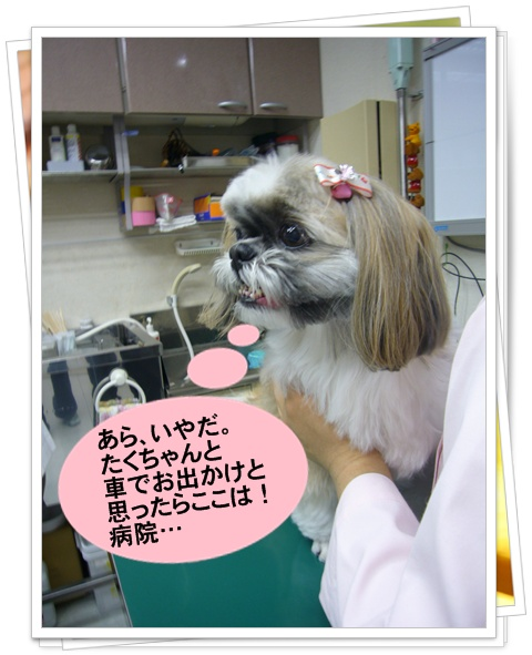 090510_kikitaku_04.jpg