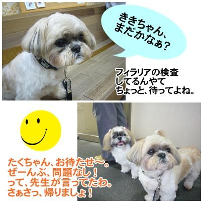 090510_kikitaku_06.jpg