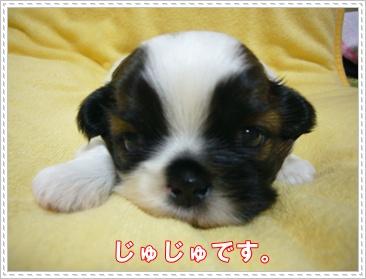 090607_juju_02.jpg