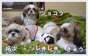090607_juju_06.jpg