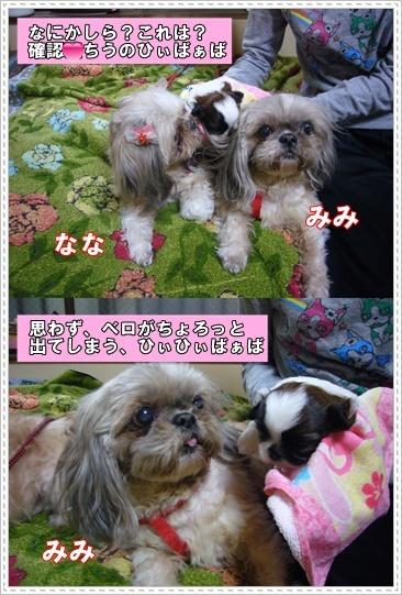 090607_juju_08.jpg