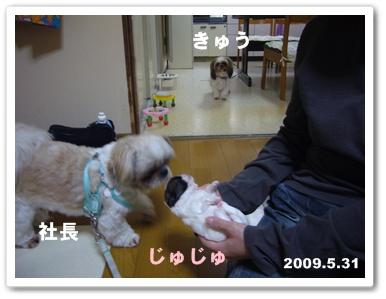 090609_Ju_02.jpg