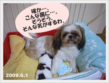 090609_Ju_03.jpg