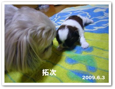 090609_Ju_04.jpg