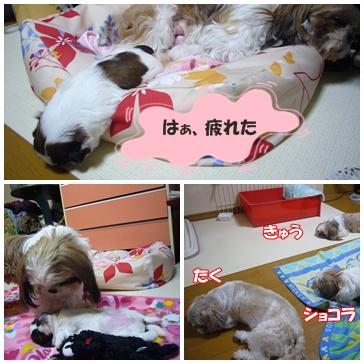 090610_mico_04.jpg