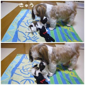 090612_juju_03.jpg